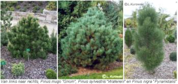 Geschikte boomsoorten